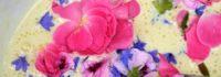 La primavera nel piatto – corso di raccolta e utilizzo delle erbe spontanee
