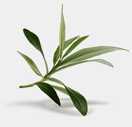 integratori olife foglie ulivo